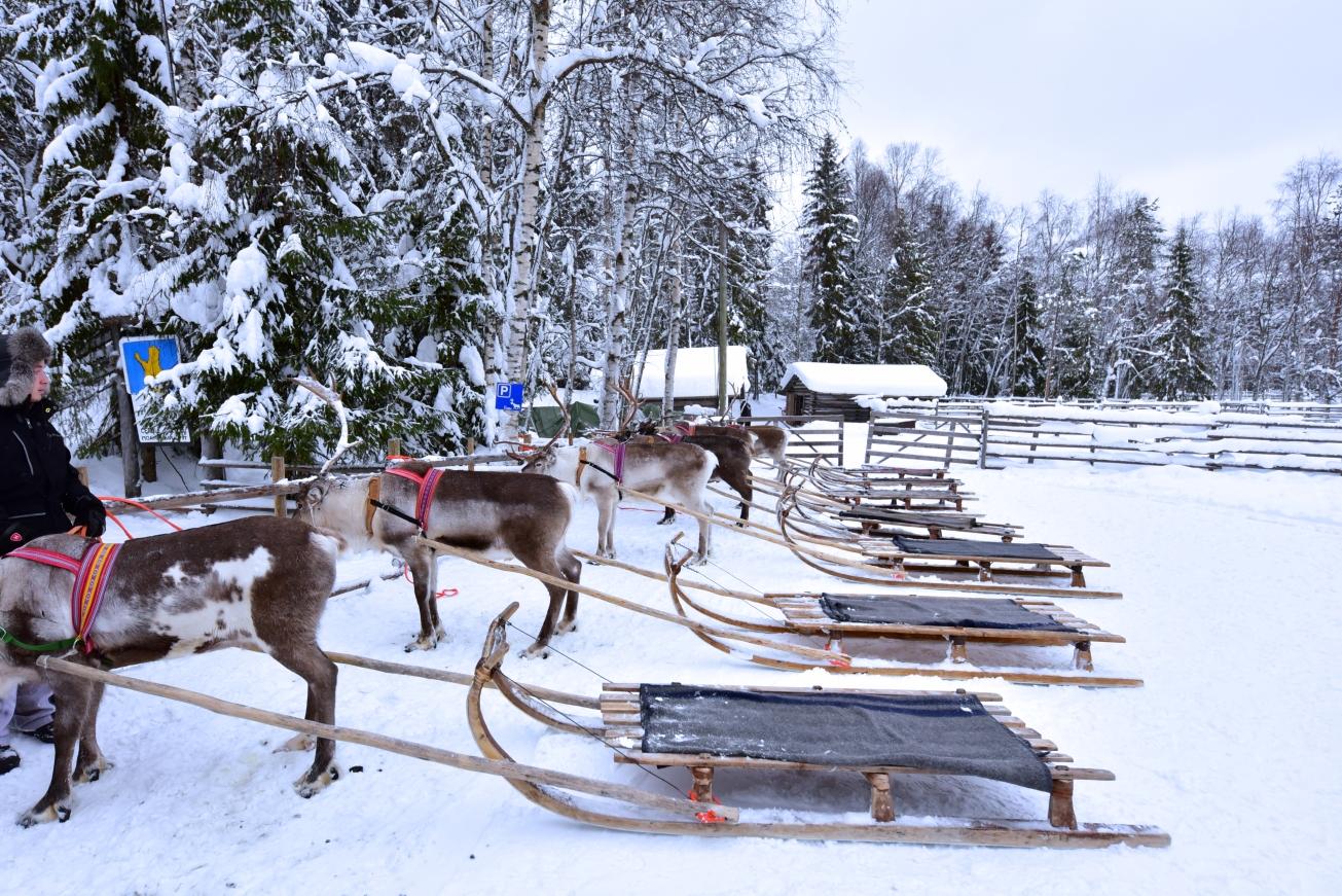 reindeer_sleds