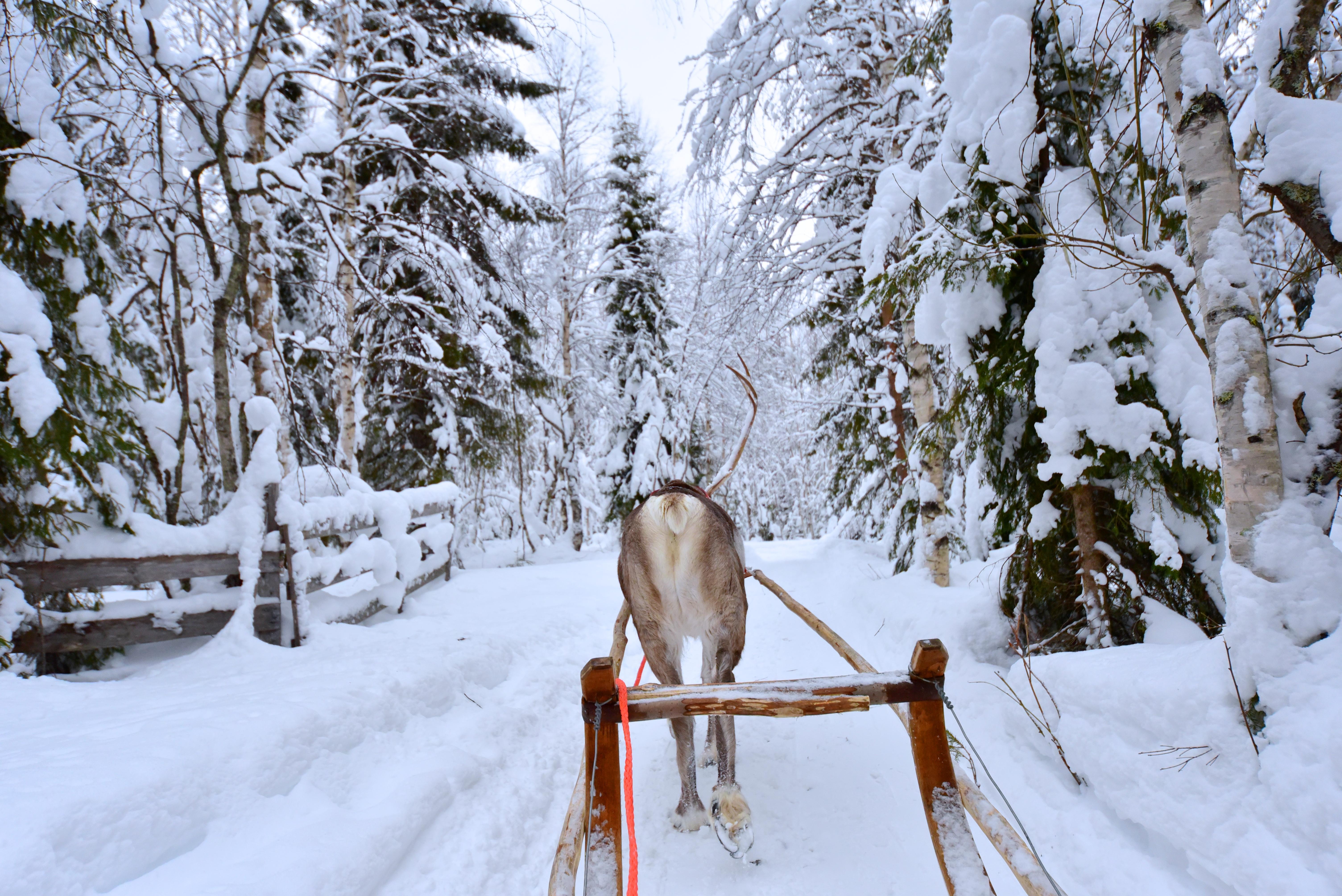 reindeer_sleigh